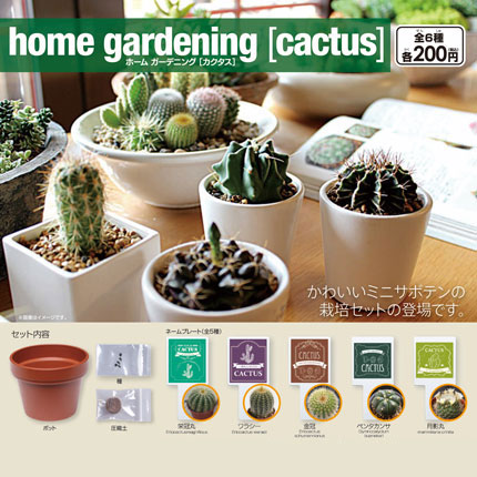 home gardening [cactus] ホーム ガーデニング [カクタス]画像